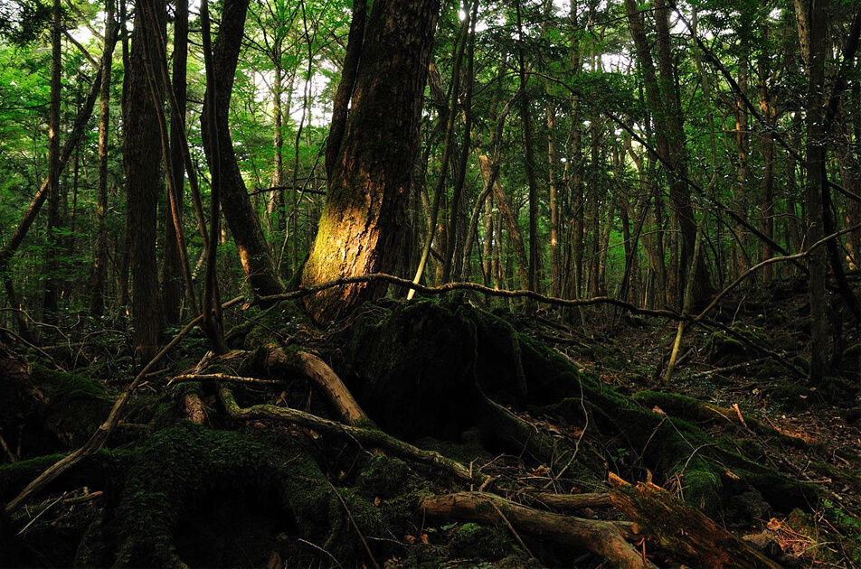 Reveal Aokigahara, A Suicide Woods In Japan